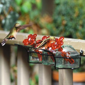 Flower Box Hummingbird Feeder